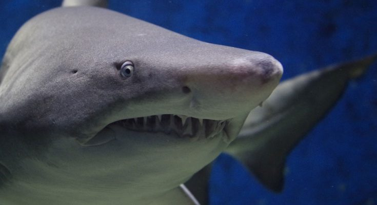 shark-attack-close-up