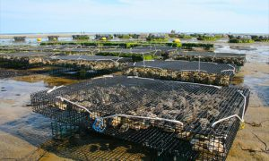 oceans new farms fish cage 300x180 - oceans-new-farms-fish-cage
